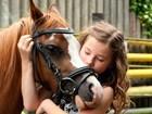 Pferdehof-hobby-wuenschdirwas