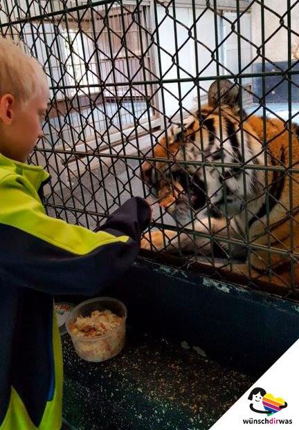 Felix im Zoo - Wunscherfüllung
